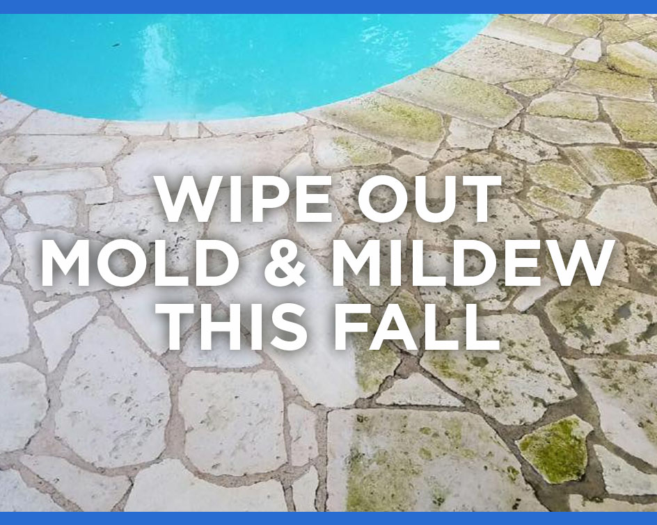 Wipe Out Mold & Mildew This Fall